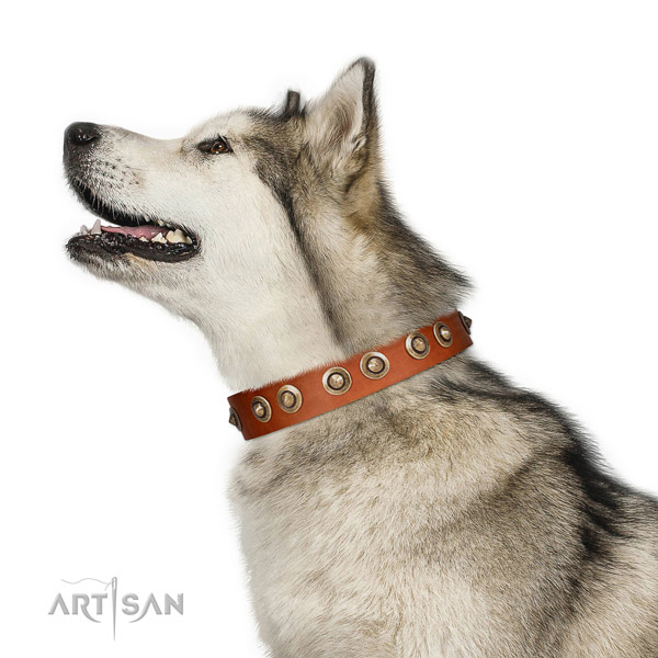 Everyday walking dog collar of leather with top notch embellishments