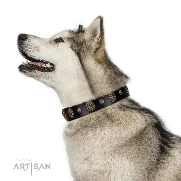 Easy wearing dog collar of natural leather with fashionable embellishments