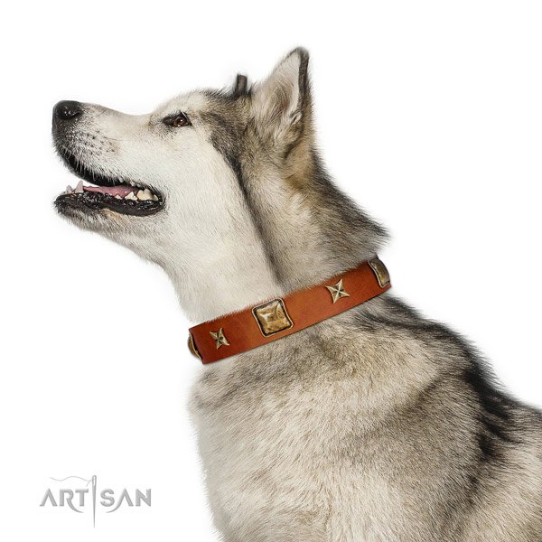 Handcrafted full grain natural leather dog collar with adornments