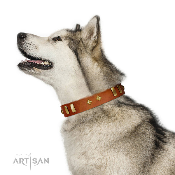 Stylish walking top rate natural leather dog collar with embellishments
