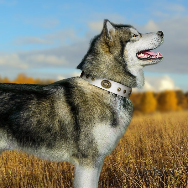 Malamute unique decorated full grain leather dog collar for walking