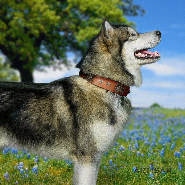 Malamute impressive studded natural leather dog collar for fancy walking