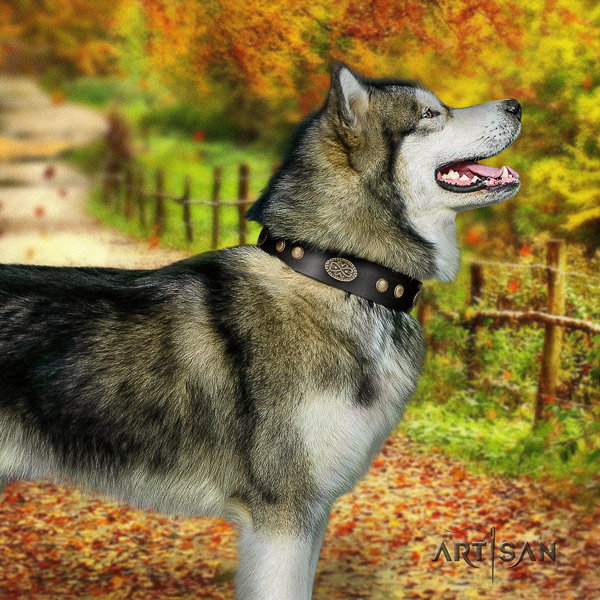 Malamute unique decorated full grain genuine leather dog collar for everyday walking