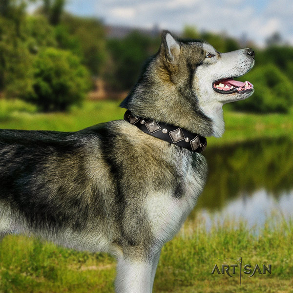 Malamute exquisite studded full grain leather dog collar for comfortable wearing
