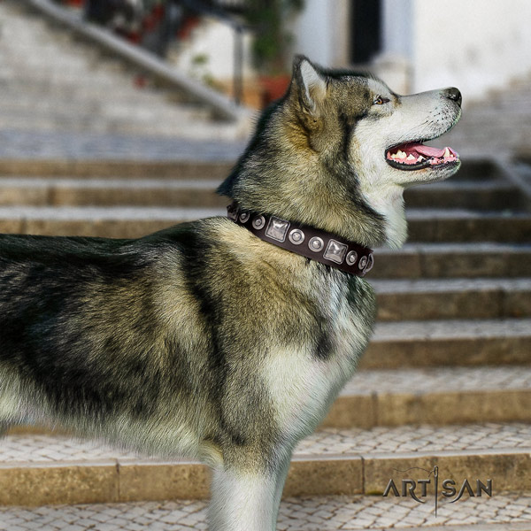 Malamute incredible embellished full grain natural leather dog collar for walking