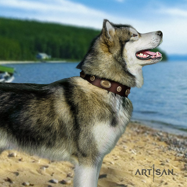 Malamute stunning embellished full grain genuine leather dog collar for fancy walking