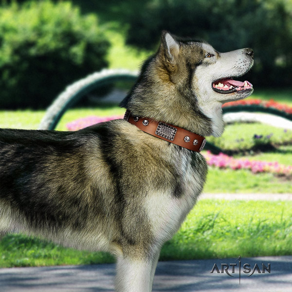 Malamute remarkable adorned full grain genuine leather dog collar for comfortable wearing