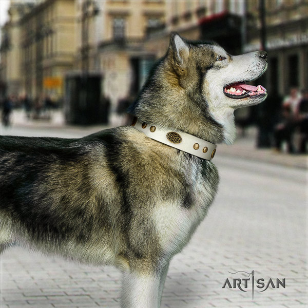Malamute exquisite studded full grain natural leather dog collar for daily use