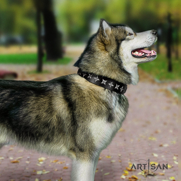 Malamute inimitable embellished full grain leather dog collar for comfy wearing