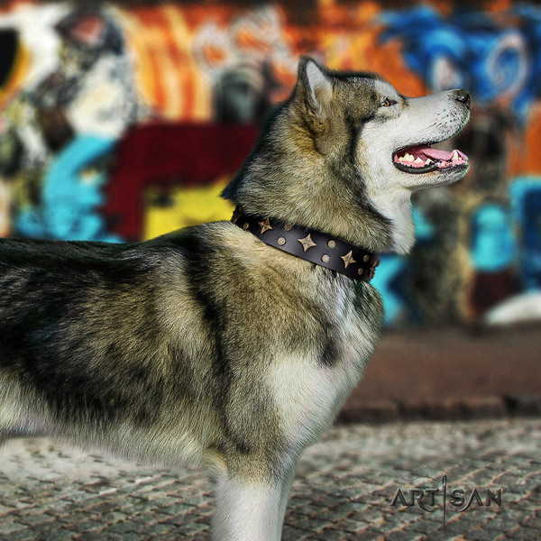 Malamute fashionable embellished genuine leather dog collar for stylish walking