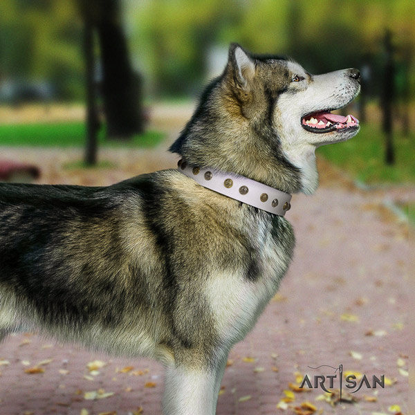 Malamute remarkable adorned full grain leather dog collar for easy wearing