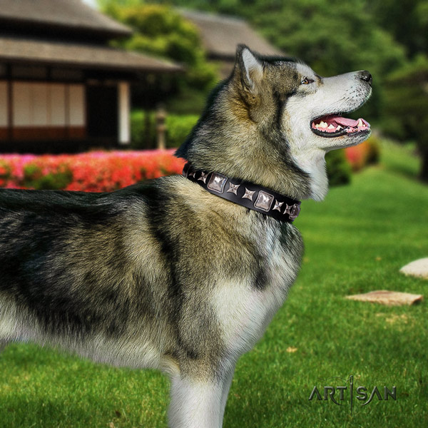 Malamute stylish studded natural leather dog collar for handy use