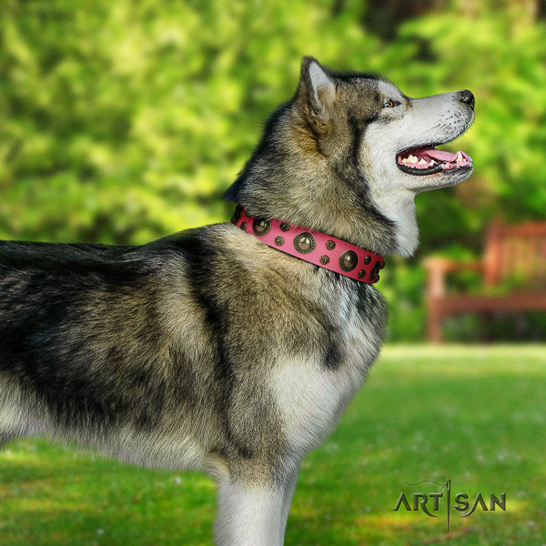 Malamute fashionable decorated genuine leather dog collar for daily use