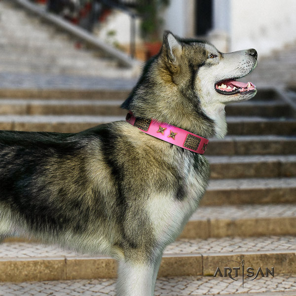 Malamute stunning decorated full grain leather dog collar for everyday walking