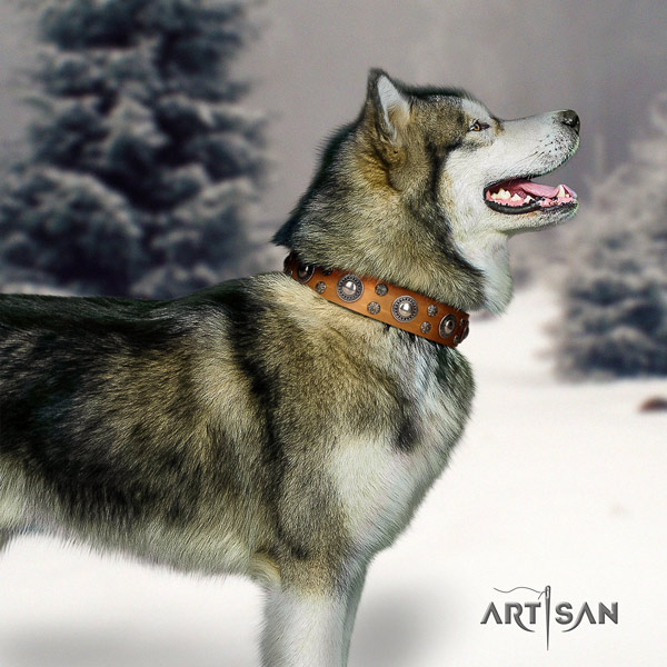 Malamute unusual decorated full grain natural leather dog collar for comfortable wearing