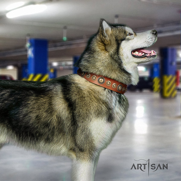 Malamute exquisite adorned full grain natural leather dog collar for stylish walking