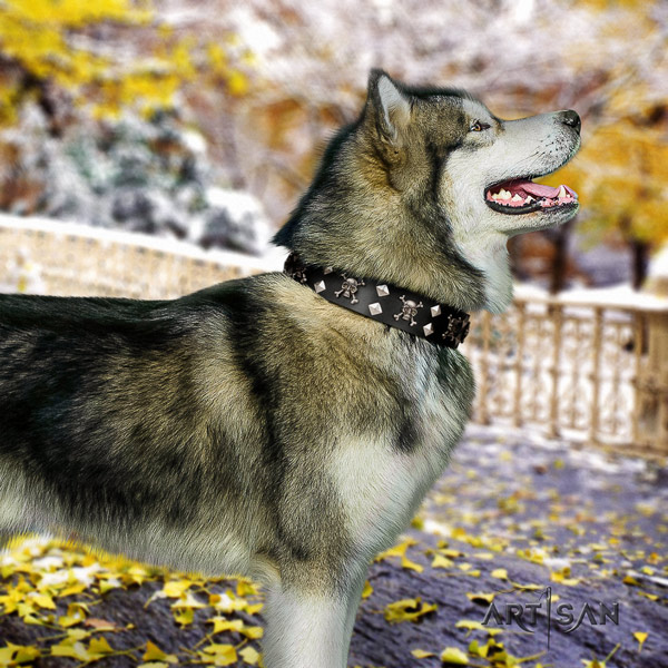 Malamute incredible adorned genuine leather dog collar for easy wearing