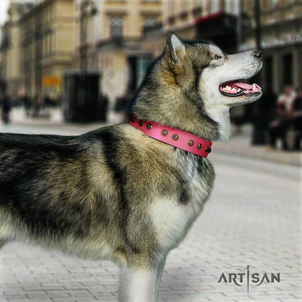 Malamute awesome decorated natural leather dog collar for daily walking