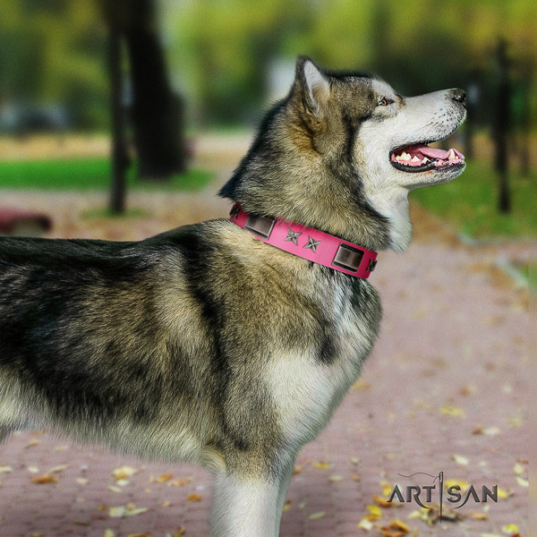 Malamute impressive studded genuine leather dog collar for daily walking
