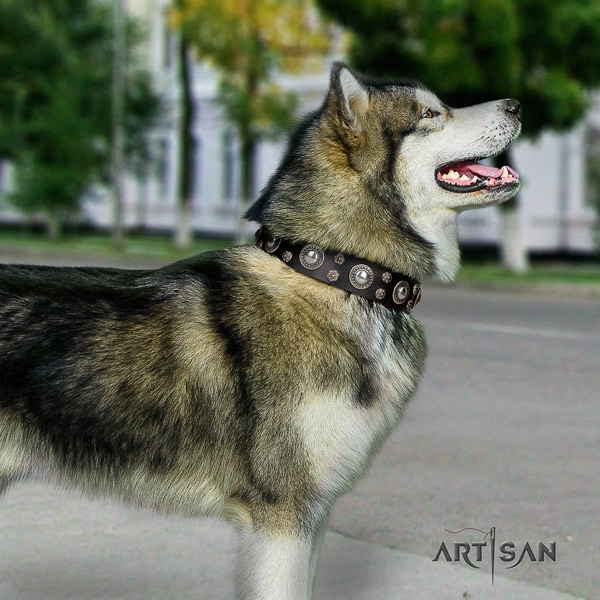 Malamute exquisite studded natural leather dog collar for walking