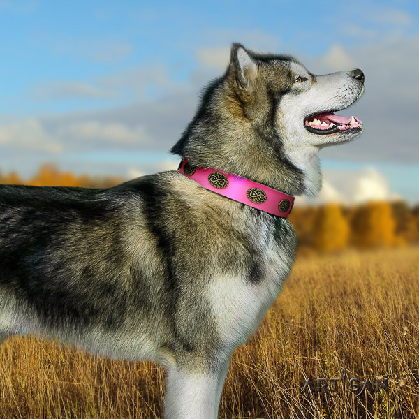 Malamute trendy decorated natural leather dog collar for walking