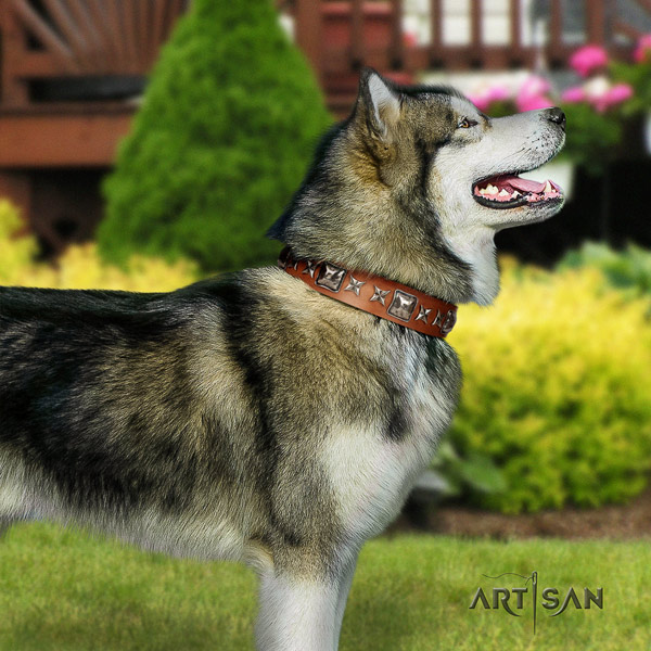 Malamute designer studded genuine leather dog collar for fancy walking