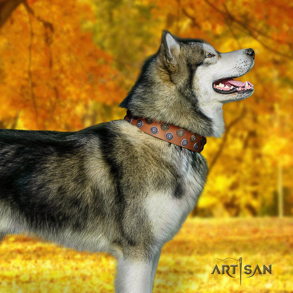 Malamute amazing decorated full grain genuine leather dog collar for comfortable wearing