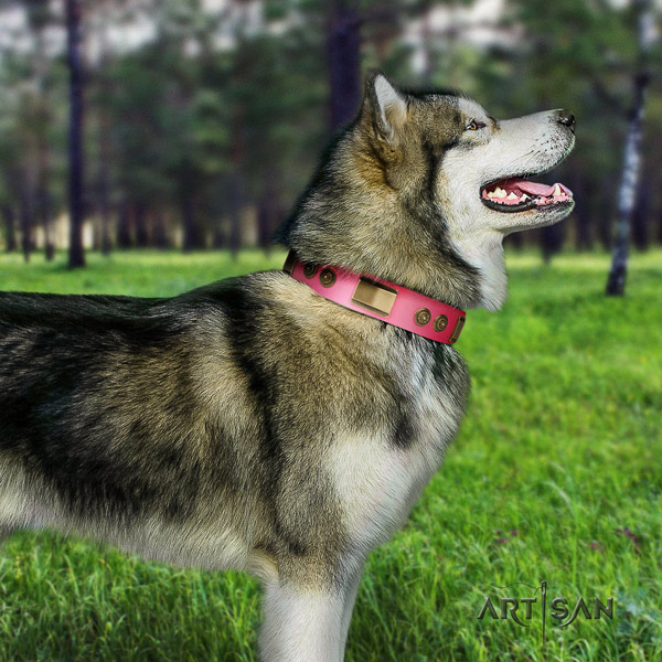Malamute top notch embellished full grain natural leather dog collar for easy wearing