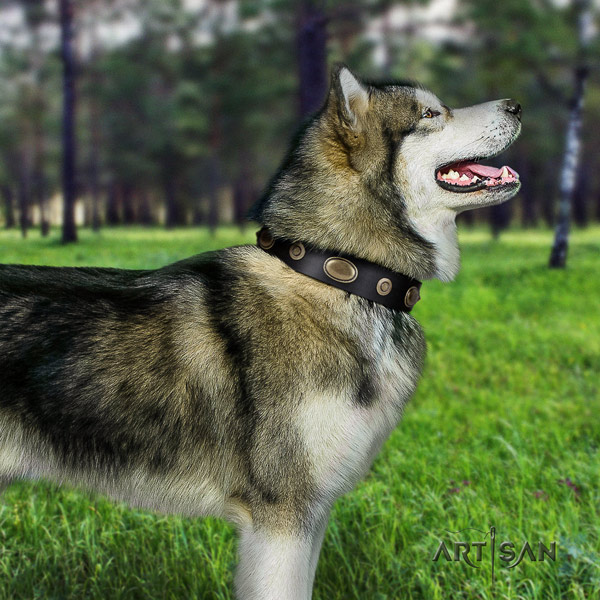 Malamute incredible embellished full grain genuine leather dog collar for comfortable wearing