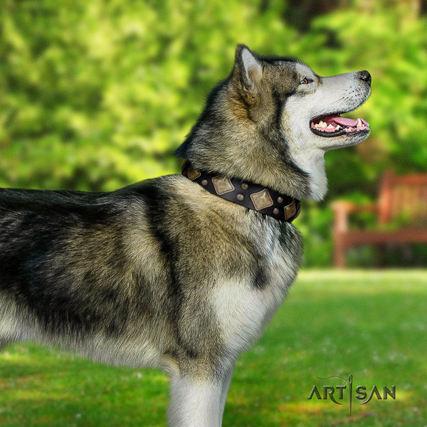 Malamute exquisite adorned full grain leather dog collar for easy wearing