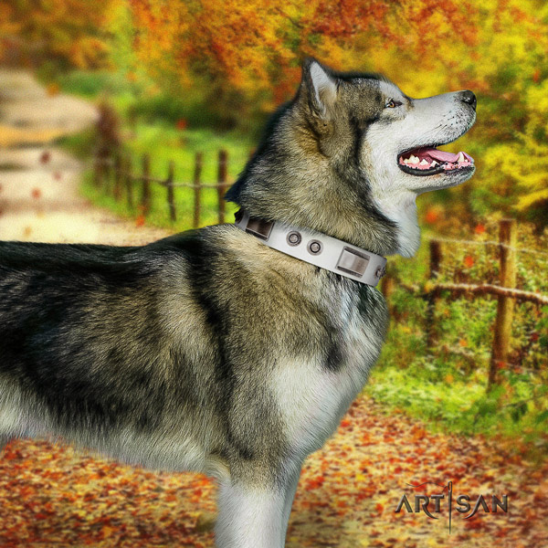 Malamute incredible studded full grain genuine leather dog collar for daily walking