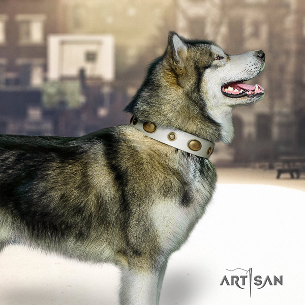 Malamute significant decorated full grain leather dog collar for everyday walking
