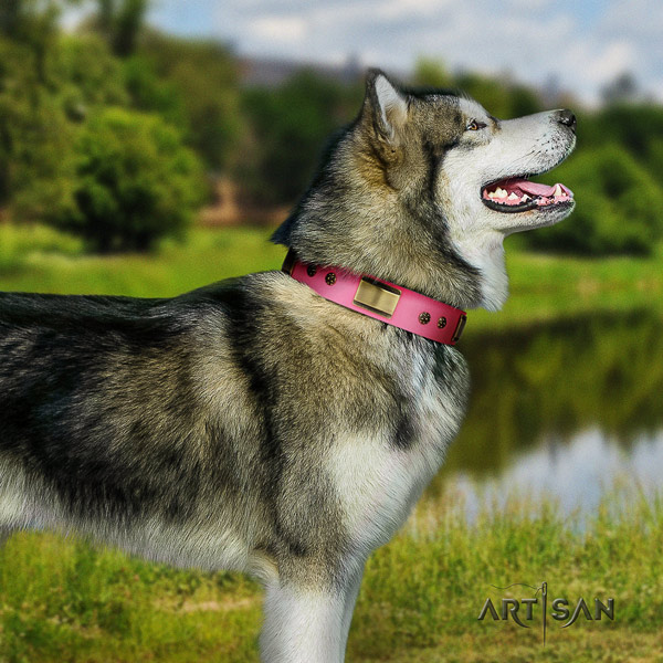 Malamute significant studded leather dog collar for comfortable wearing