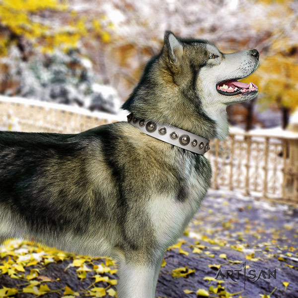 Malamute top notch decorated full grain leather dog collar for comfy wearing