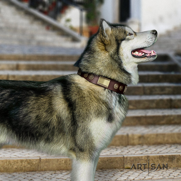 Malamute designer decorated full grain natural leather dog collar for walking