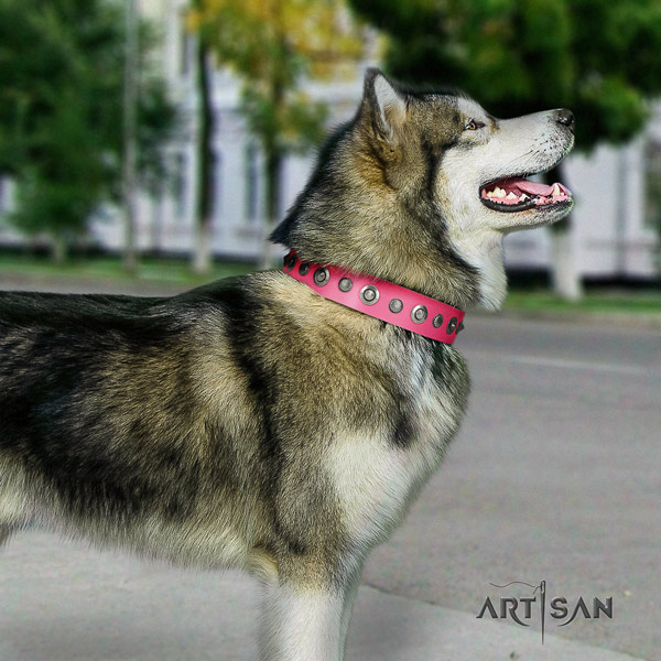 Malamute exquisite adorned full grain leather dog collar for daily walking
