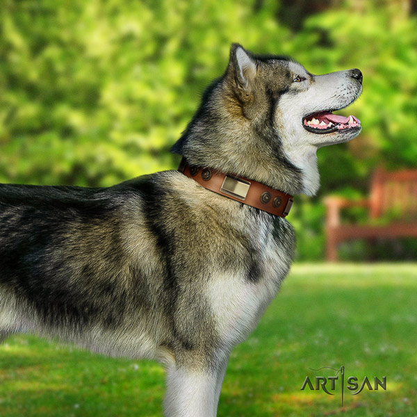 Malamute incredible studded full grain genuine leather dog collar for fancy walking