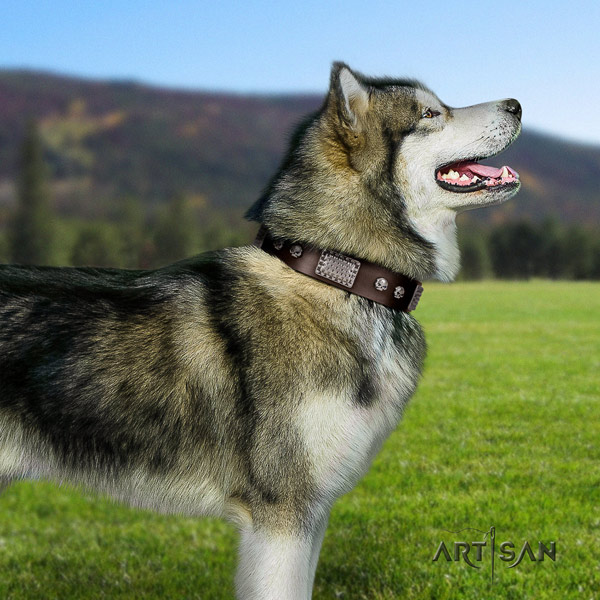 Malamute stylish design adorned full grain genuine leather dog collar for everyday use