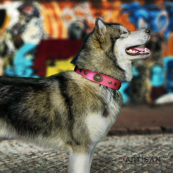 Malamute awesome decorated full grain natural leather dog collar for handy use