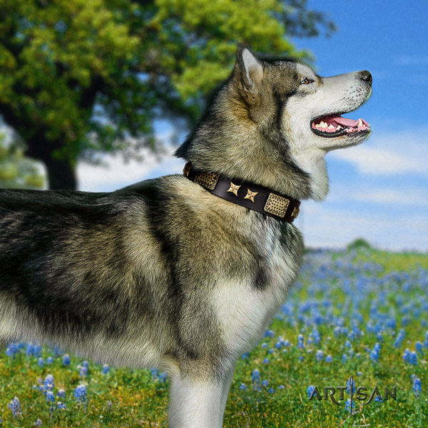 Malamute significant adorned natural leather dog collar for everyday walking