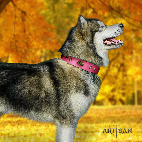 Malamute exceptional adorned full grain genuine leather dog collar for stylish walking