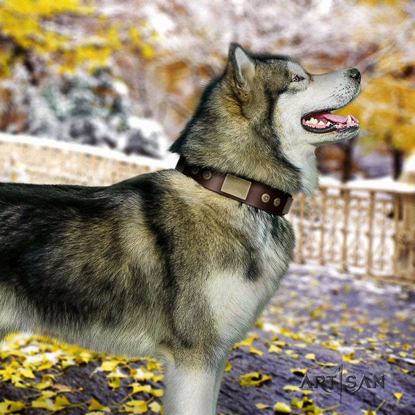 Malamute amazing studded full grain natural leather dog collar for everyday walking