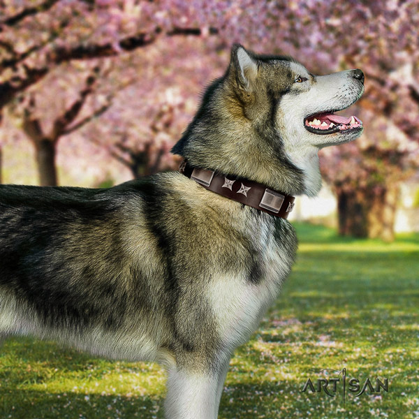 Malamute stylish adorned full grain genuine leather dog collar for stylish walking