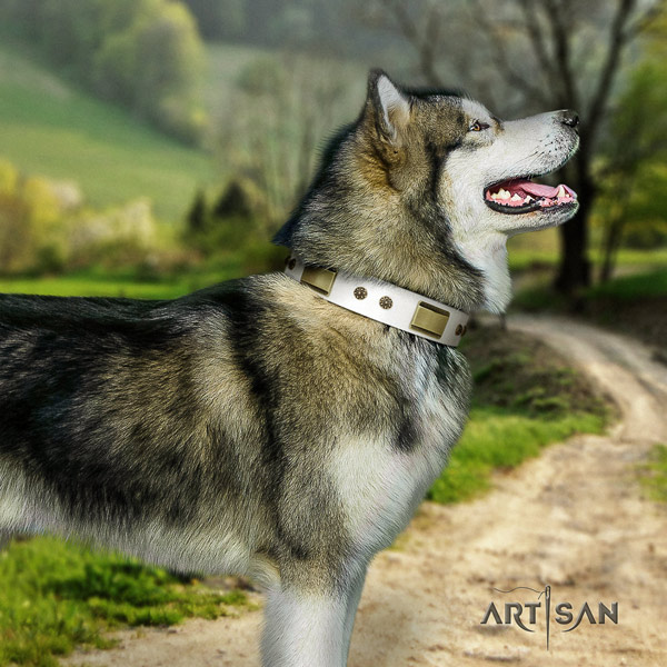 Malamute stunning adorned natural leather dog collar for walking