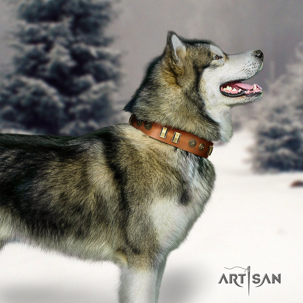 Malamute stunning decorated leather dog collar for daily walking