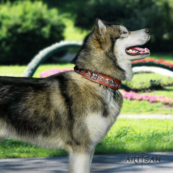 Malamute exceptional adorned full grain natural leather dog collar for walking