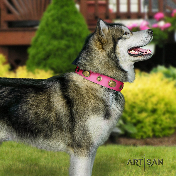 Malamute top notch studded natural leather dog collar for easy wearing
