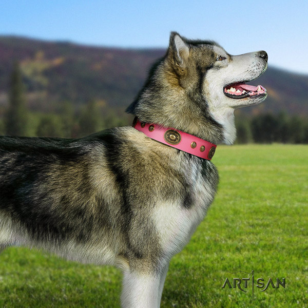 Malamute impressive adorned natural leather dog collar for everyday walking
