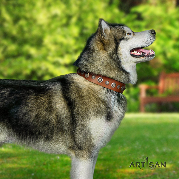 Malamute unique embellished natural leather dog collar for easy wearing