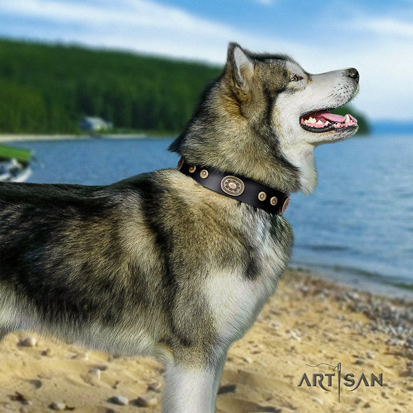 Malamute significant decorated natural leather dog collar for comfy wearing